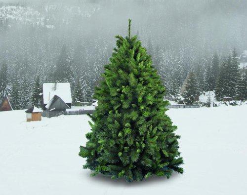 House-of-Fun-Albero-di-Natale-Germogliato-0